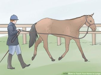 aid1765559-728px-teach-your-horse-to-lunge-step-4