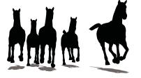 Running Herd.png