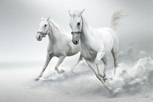 White-Horse-Wall-Mural
