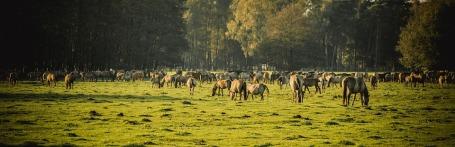 brumby-horses-2976566_960_720