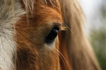 horse-2087980_960_720.jpg