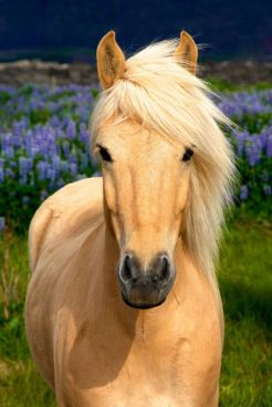 680a8f2aaa5193b25e8cc375c4f94da0--blonde-beauty-pretty-horses