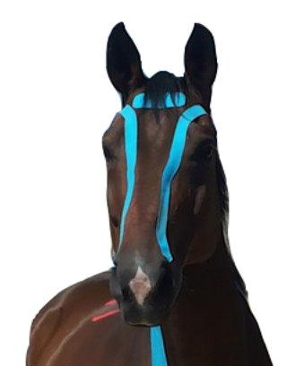 cat-image-kinesio-equine-s